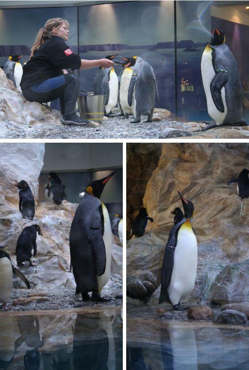 pingouin1.jpg